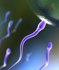 عوامل موثر بر سلامت اسپرم ها